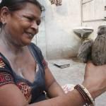 City Moment – A Bird on Death Row, Farash Khana