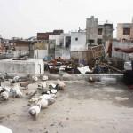 City Life – Bird Flying, Matia Mahal