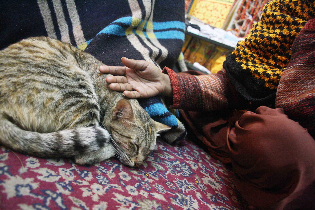 Mission Delhi - Billi, Hazrat Nizamuddin Dargah