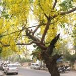 City Season – The Amaltas, Bungalow Road