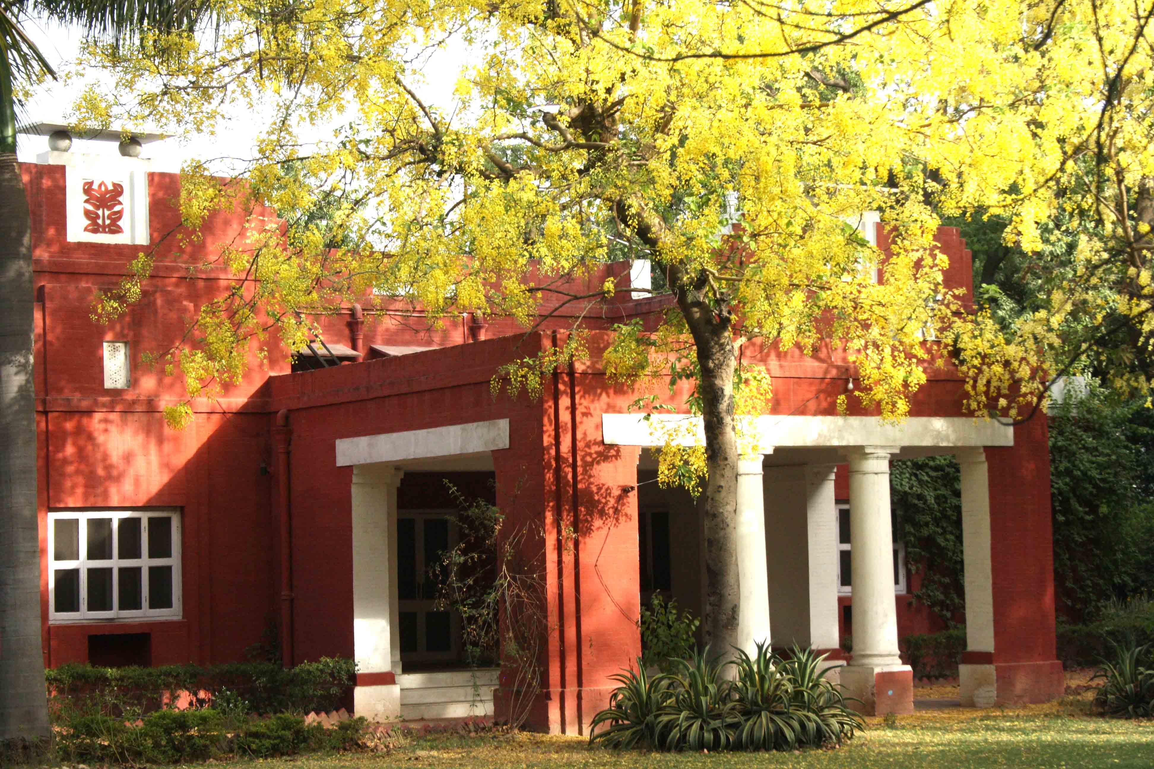 City Season – The Yellow Amaltas, Prithviraj Marg
