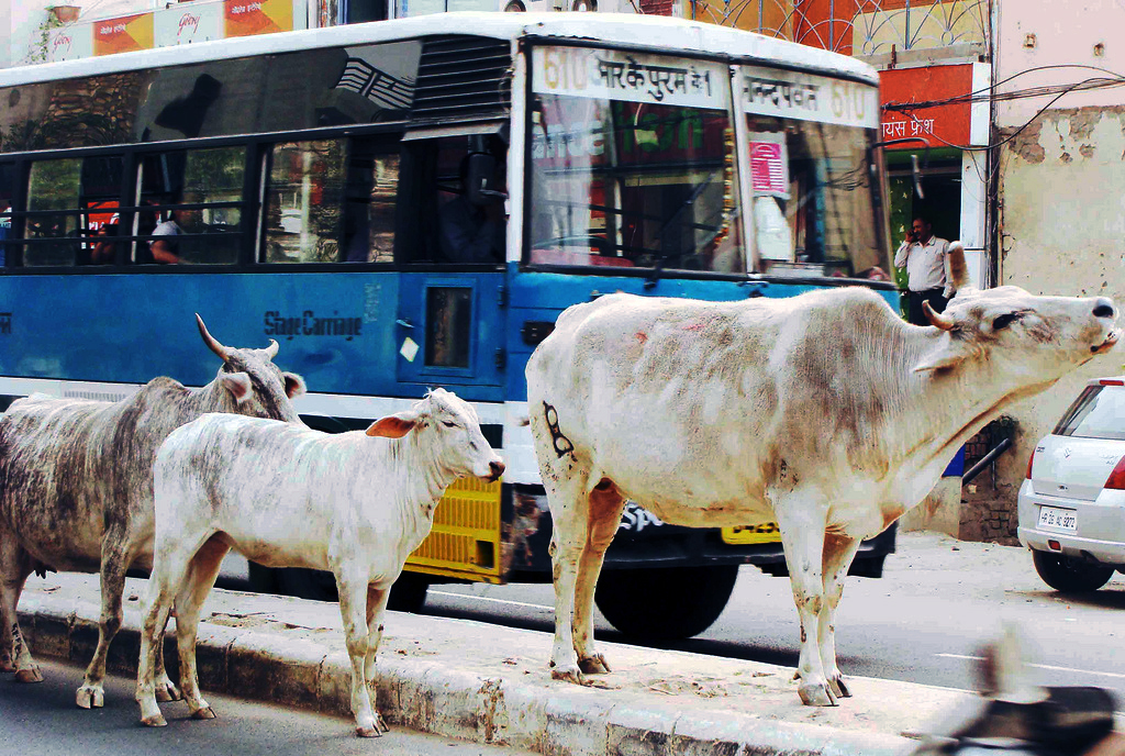 City Notice - Job Vacancy for Cow Eaters, Shahpur Jat