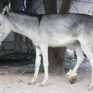 Atget's Corner – 181-185, Delhi Photos