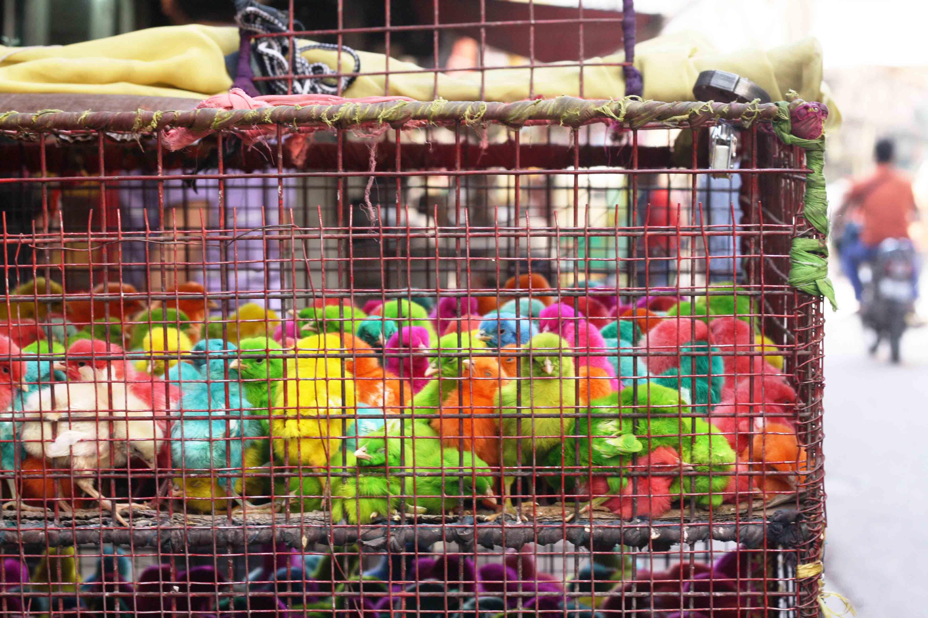 City Moment – Dyed Chicks, Okhla
