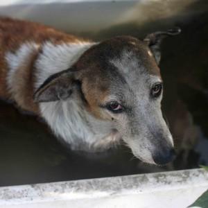 City Season - The August Dog, Tilak Nagar