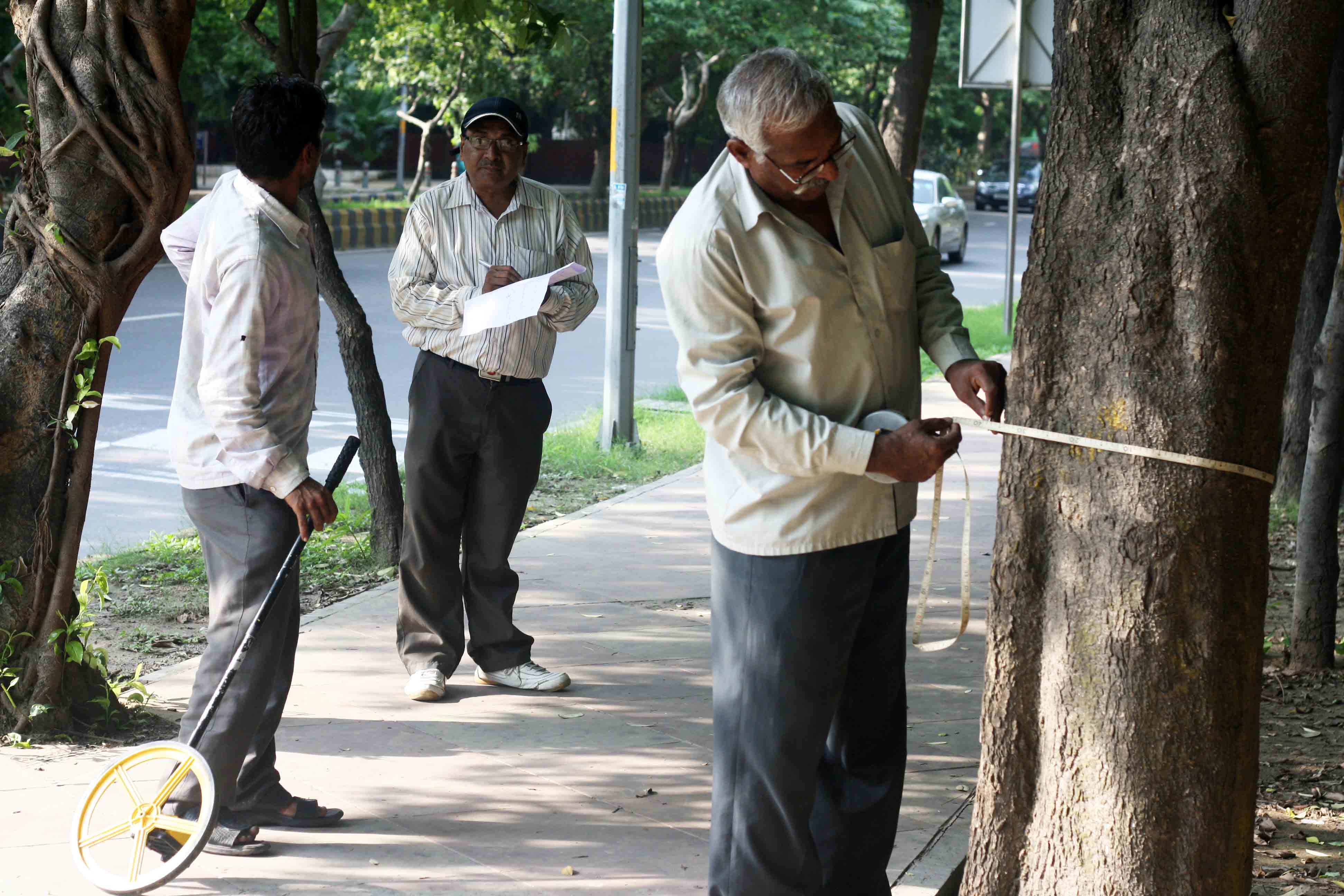 City Moment – The Tree Surveyors, Bhisham Pitamah Marg