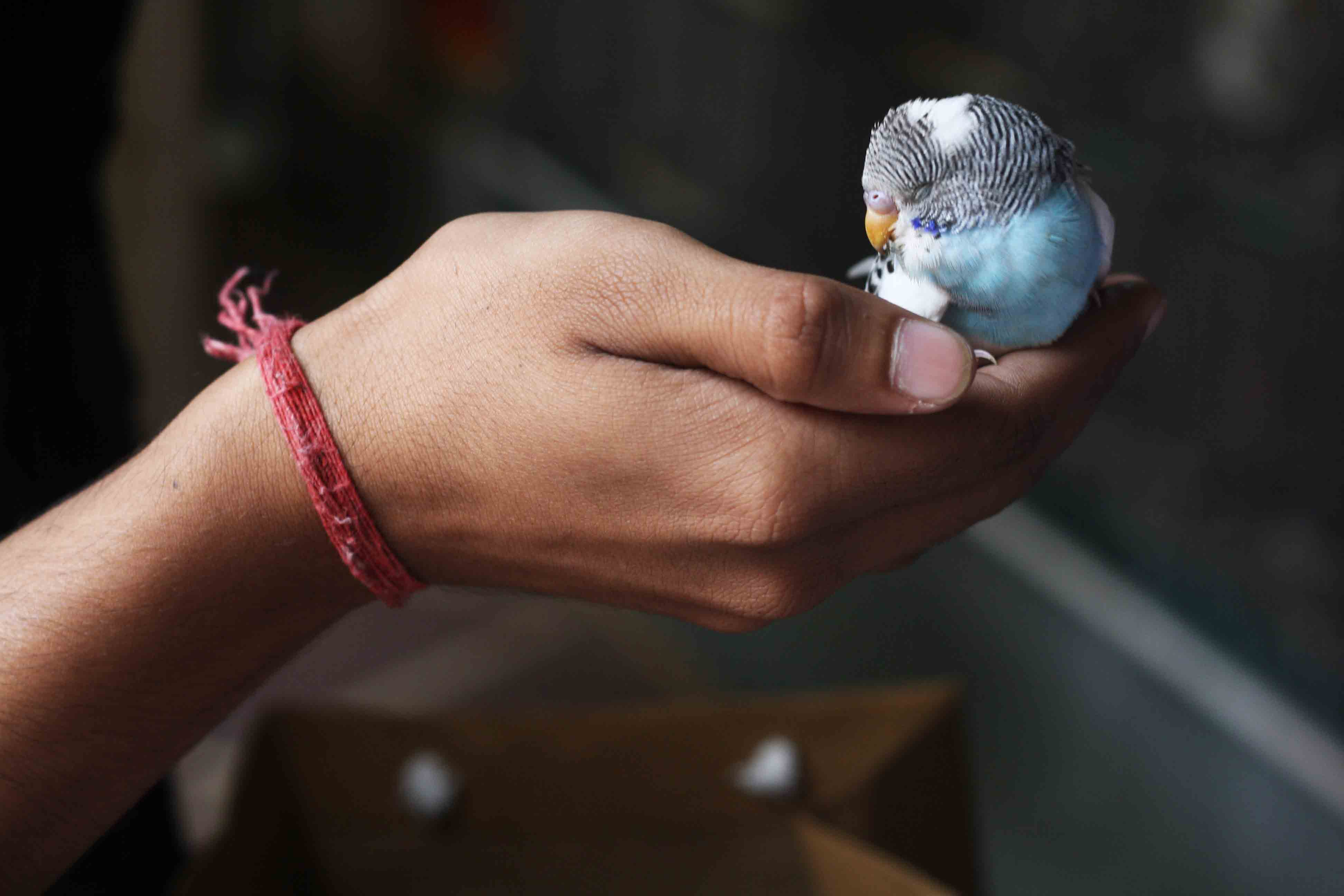 Delhi's Bandaged Heart – William Meredith, Jain Bird Hospital
