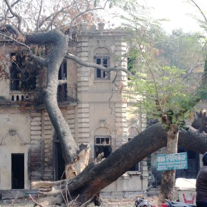 Letter from Allahabad  - The Last Bungalows, Civil Lines