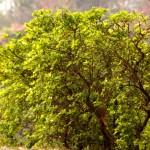 City Life - Delhi Lovers, Lodhi Gardens