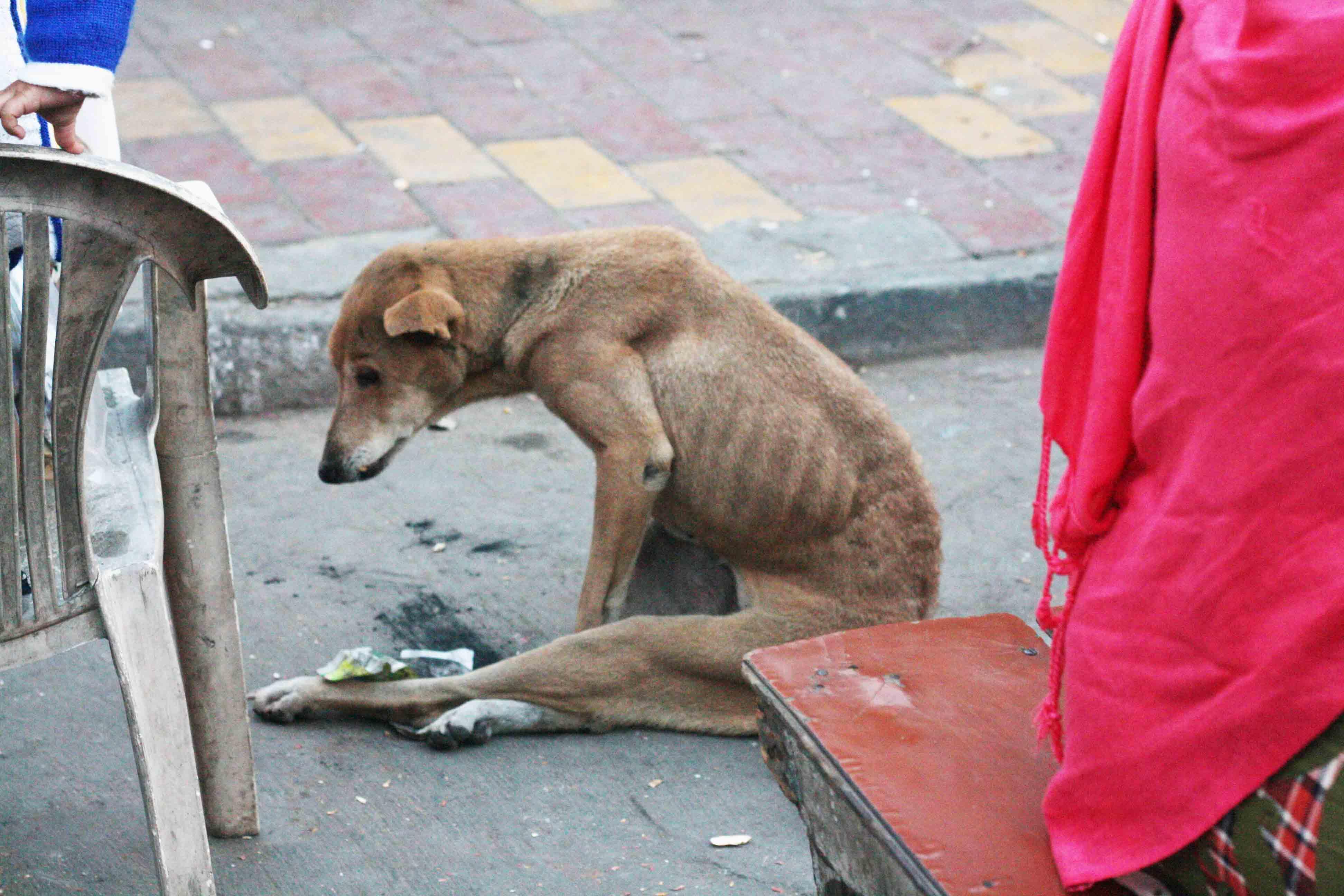 Mission Delhi – Julie, Hazrat Nizamuddin Basti