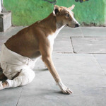 City Crisis - Save Friendicoes & Save Strays, Defence Colony