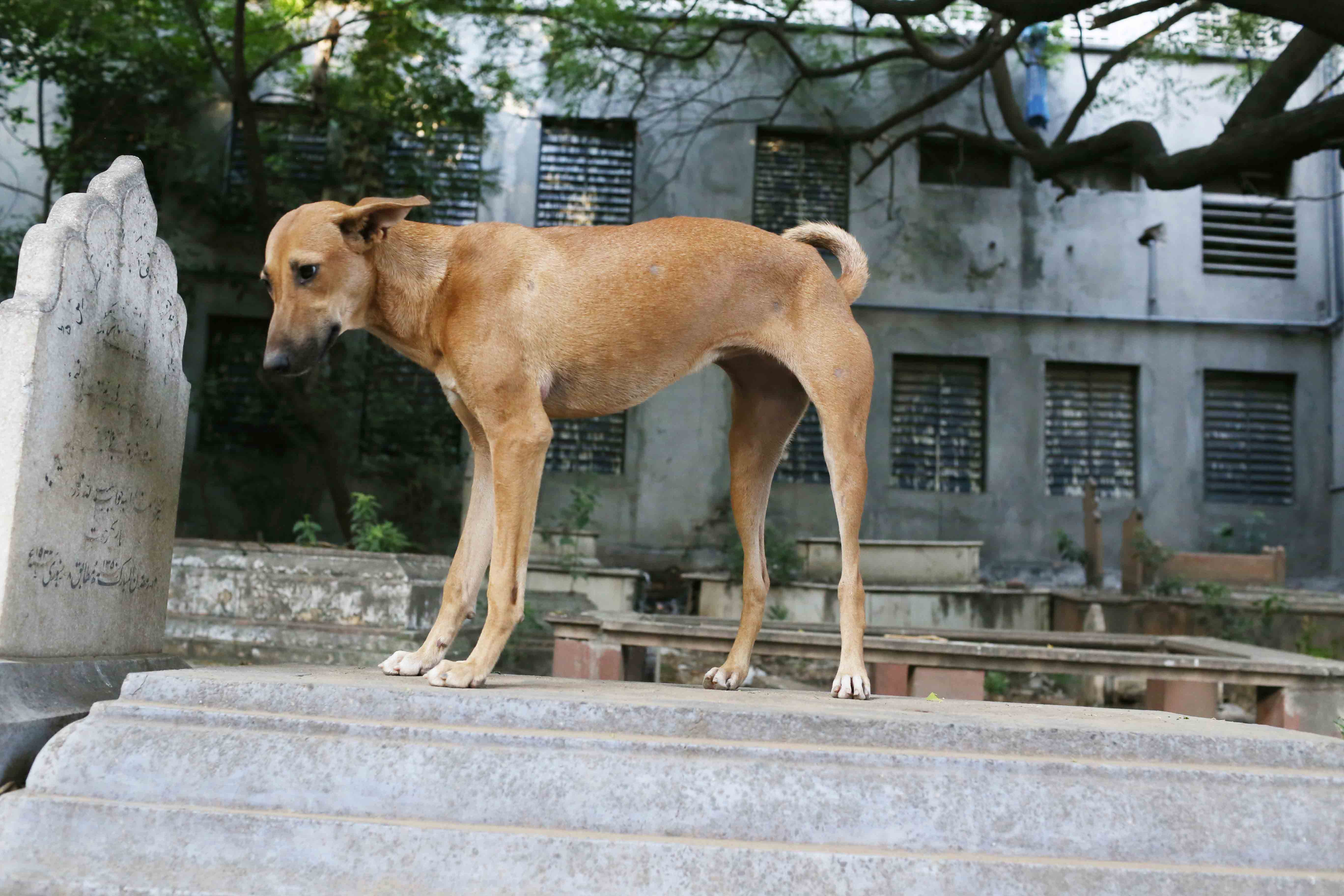 Photo Essay - The Brown Dog On a Stone Tomb, Mehrauli