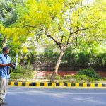 City List – Pradip Krishen's Most Suitable Trees for Delhi