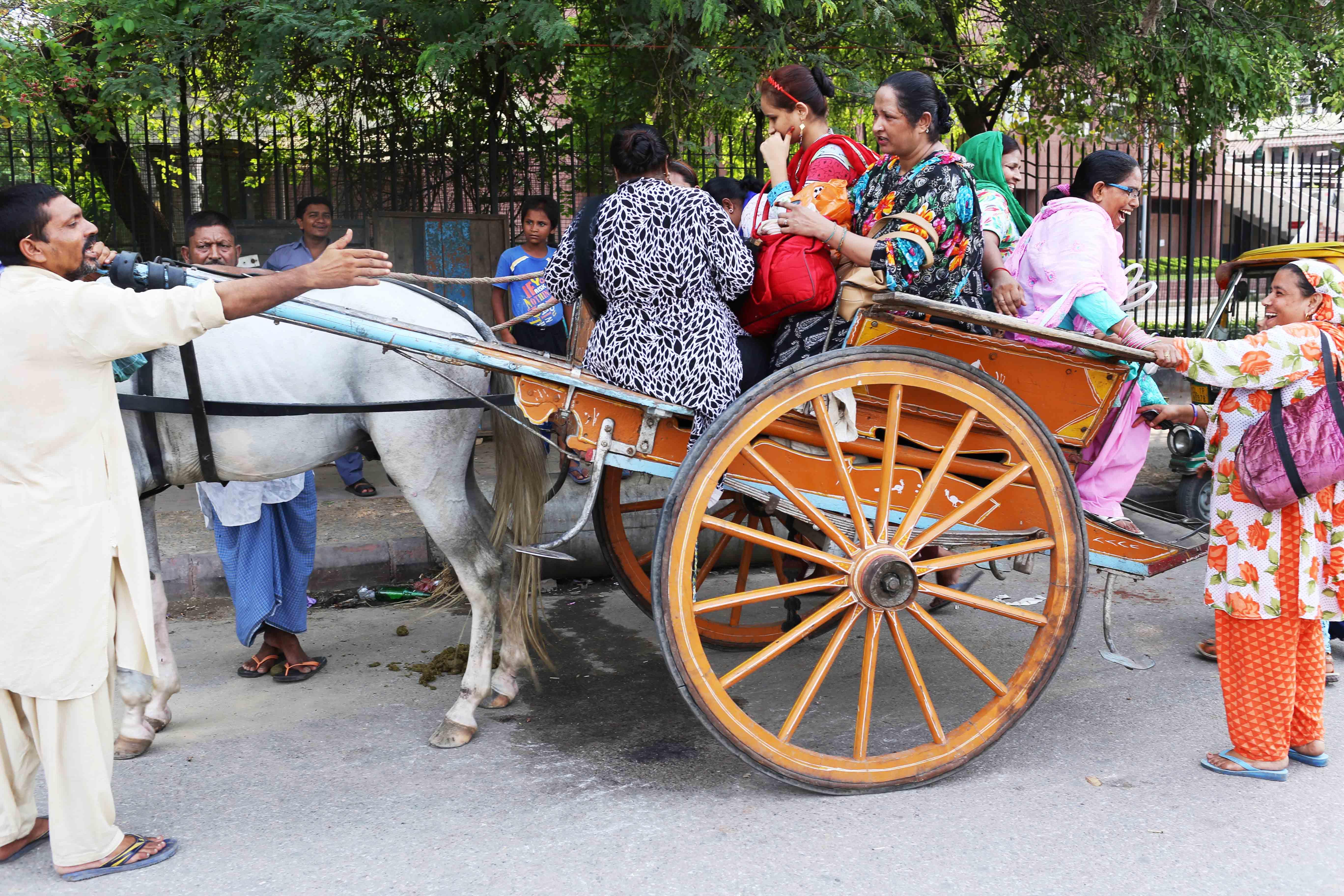 City Moment - Tonga Riders, Outside Zakir Husain Delhi College