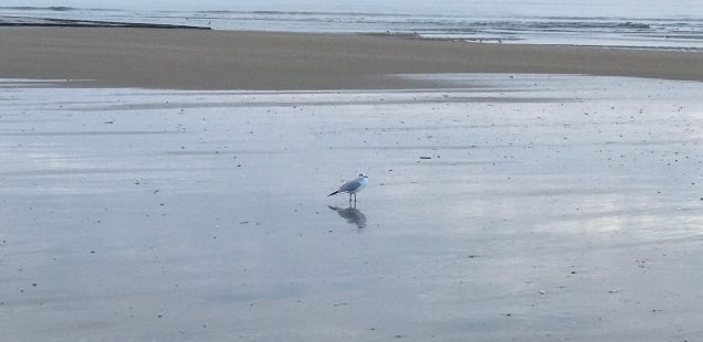 City Moment - Seeing Proust's Soul in a Solitary Seagull, Cabourg, France