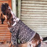 City Life - Winter Couture for the Goats, Walled City