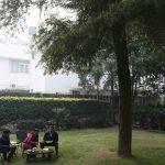 City Life - The Shriram Family's Pine & Seeta Ashok Trees, Sardar Patel Road