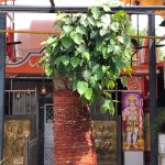 City Faith - A Tree's New Life, Shiv Temple, Vinay Marg