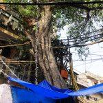 City Landmark - Peepal Tree, Tiraha Behram Khan