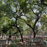City Hangout - Dilli Gate Graveyard, Near ITO