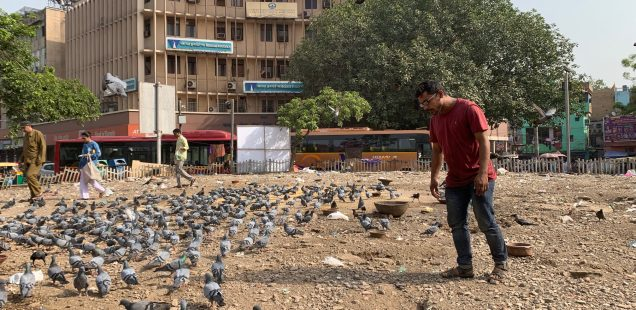 City Hangout - Bird Feeding Pilgrimage, Hamdard Chowk