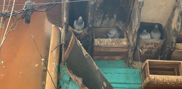 Home Sweet Home - Bird Housing, Galli Sooiwallan Street
