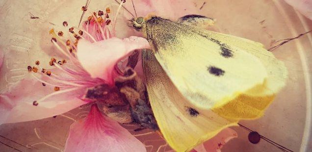 Our Self-Written Obituaries – Julia Julley's Butterfly, Varna, Bulgaria