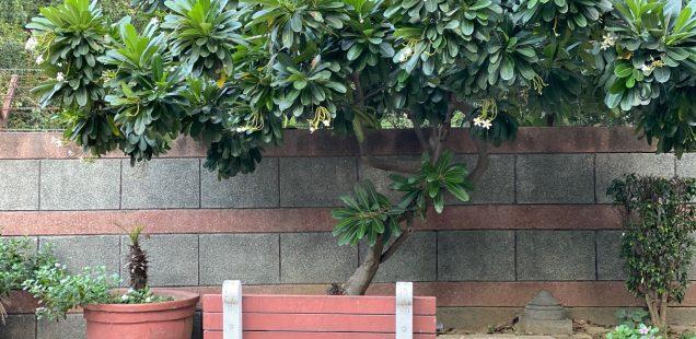 City Hangout - Strangest Bench, Central Delhi