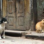 City Hangout - Cats & Dogs, Bulbuli Khana