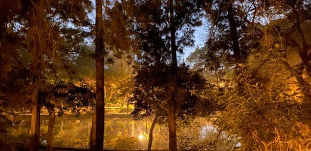 City Walk - Around the Lake, Lodhi Garden