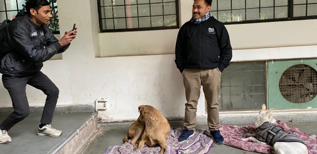 City Life - Two Dogs, Zamrudpur Community Center