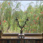 Life with Corona - Craft Activist Laila Tyabji's Window, Shanti Niketan