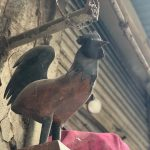 City Life - The Paris Bound Rooster, Near Pahari Rajaan