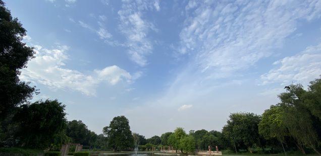 City Nature - Corona Sky, Sunder Nursery