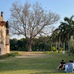 City Season - Leafless Tree, Lodhi Garden