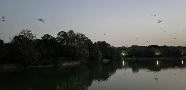 City Hangout - Bat Island, Deer Park