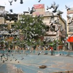 City Moment – The Conference of Birds, Basant Lok Market