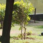 INFIDELITIES@The Delhi Walla - Poet-Philosopher Male Seeks a Female with Fantasies