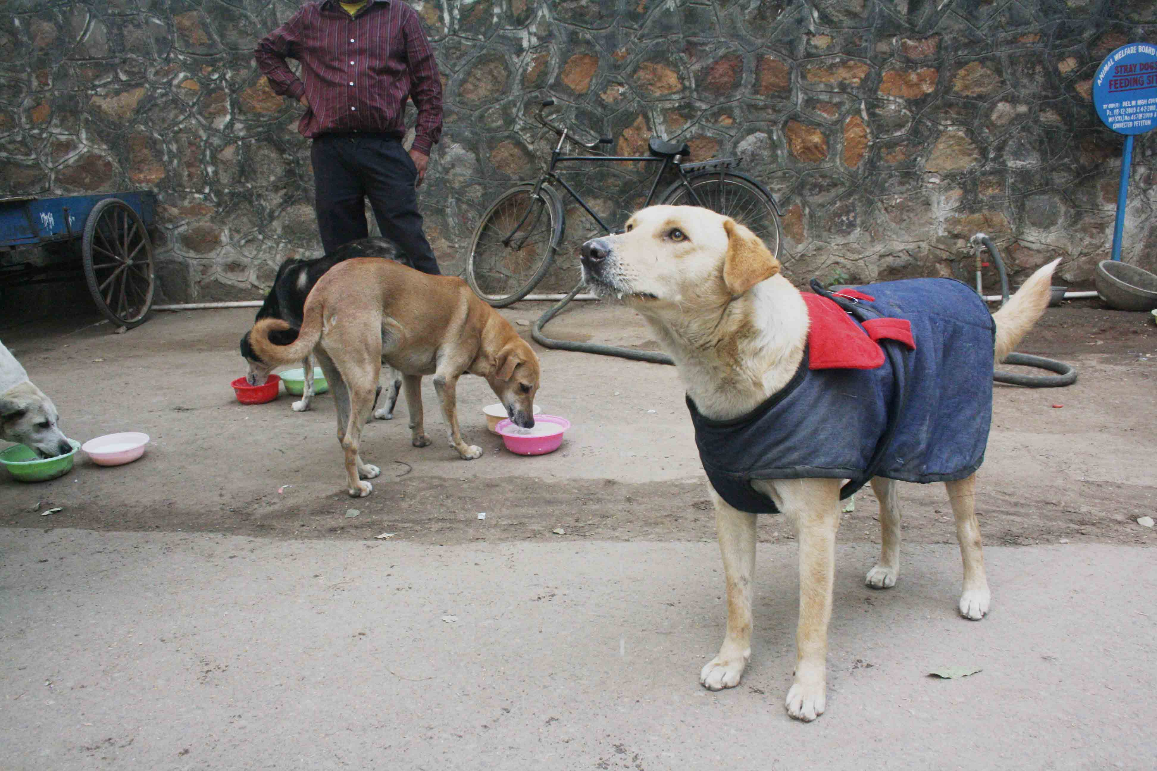 City Living - Stray Dogs Feeding Sites, Around Town