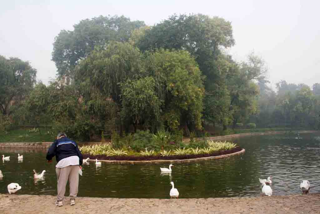 City List – Resident Birds, Lodhi Garden