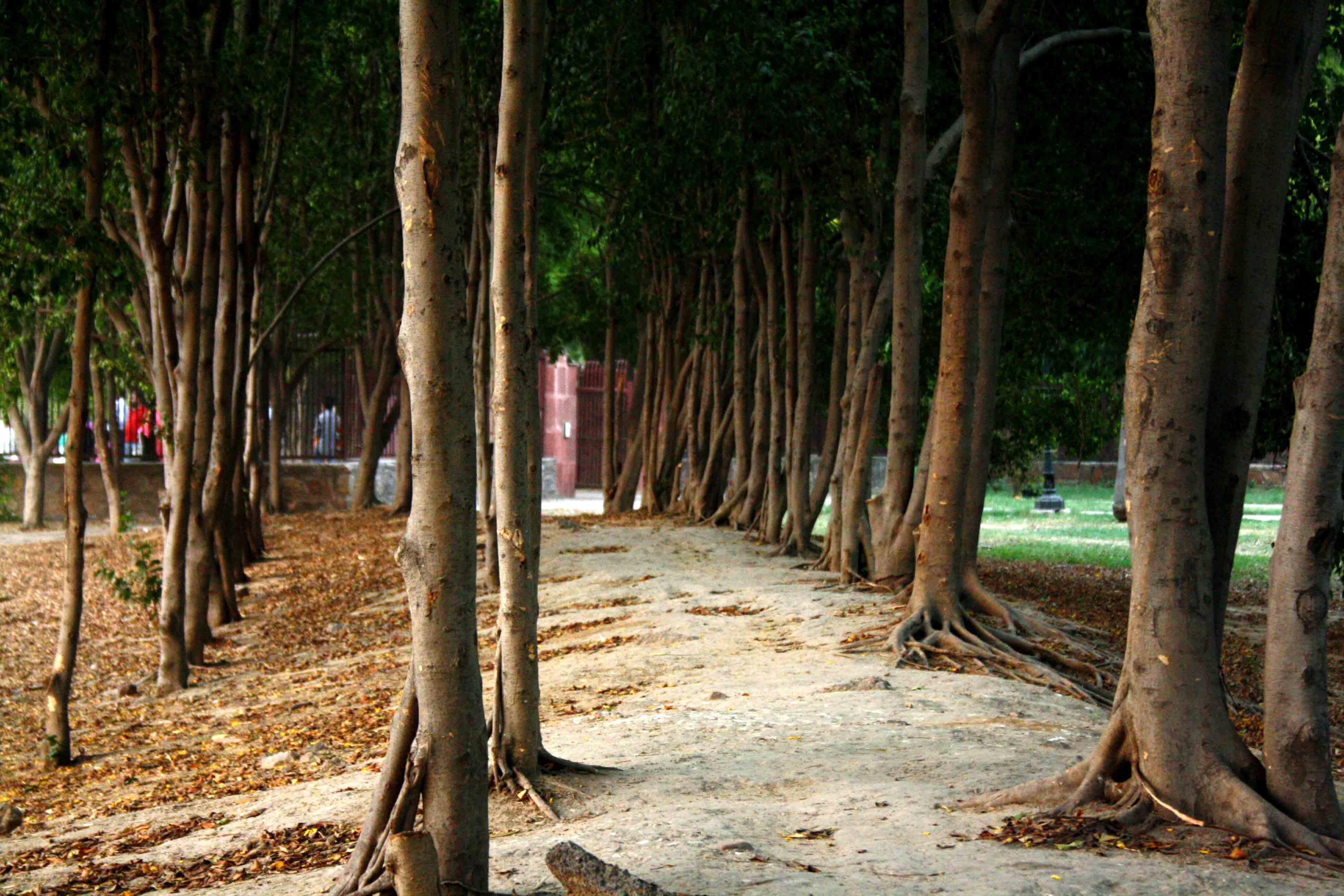 City Walk –Weeping Fig Way, Near Humayun's Tomb