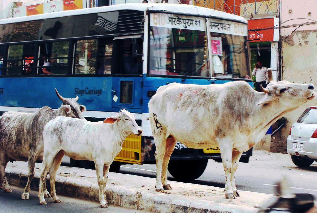 City Notice - Job Vacancy for Cow Eaters, Shahpur Jat