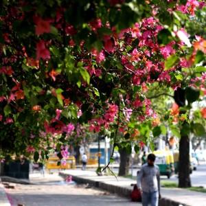 City Season – Summer Warning, Chelmsford Road