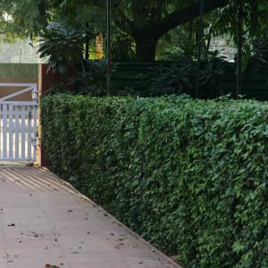Atget's Corner – 581-585, Delhi Photos