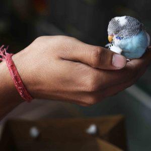 Delhi's Bandaged Heart – William Meredith, Jain Bird Hospital