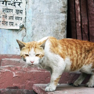 City Life - Living with Cats, Old Delhi