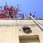 City Season - Semal Tree, Daryaganj Police Station