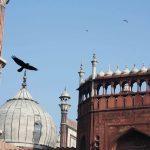 Atget's Corner – 916-920, Delhi Photos