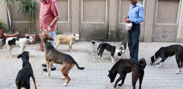 City Life - Street Dogs of H. Nizamuddin East, Central Delhi