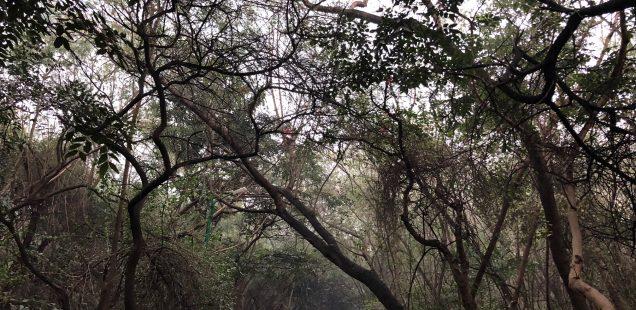 City Walk - Jahanpanah City Forest, South Delhi